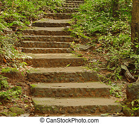 Stone stairs in a forest