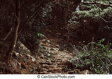 Stone stairs up to the hill in the dark green forest.