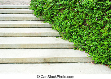 Stone stairway with green plant in the garden
