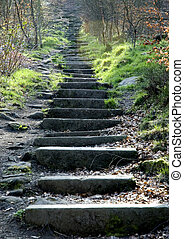 stone steps in woodland