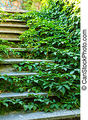 Stone steps street staircase overgrown with green ivy