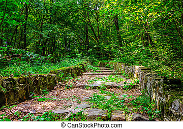 stone steps through the park with foliage - path with steps...