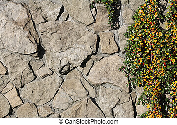stone wall and creeping plant
