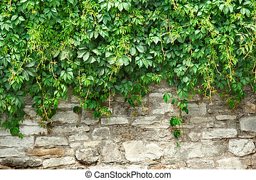 Stone wall and plants
