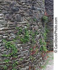 stone wall detail
