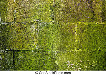 stone wall moss covered