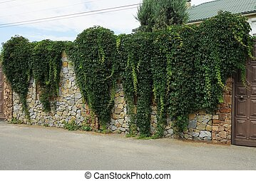 stone wall of a fence overgrown with green vegetation