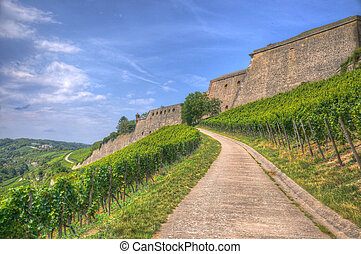 Stone Wall of Marienberg Fortress (Castle) through grapes to Wurzburg, Wurzburg, Bayern, Germany