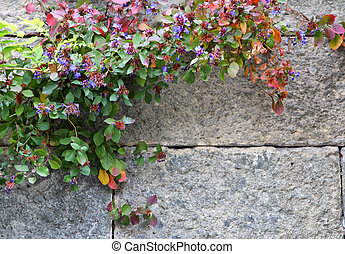 Stone wall with flowers