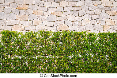 Stone wall with green plants .
