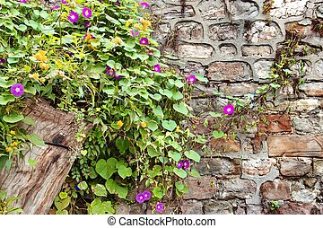 Stone Wall with Plants