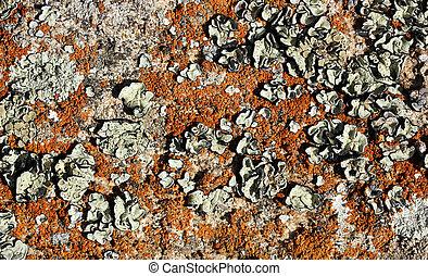 Stone with lichen (background)