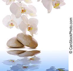 stones, белый, orchid., массаж
