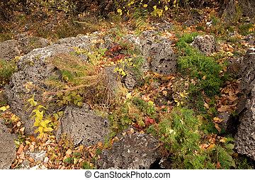 Stones among fallen down leaves
