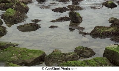 Stones covered with algae on the beach - Stones covered with...