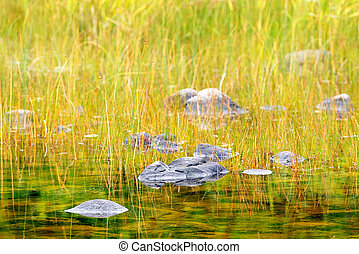 Stones in a pond near the sea