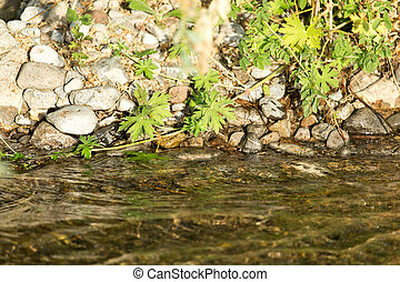 stones in the mountain river