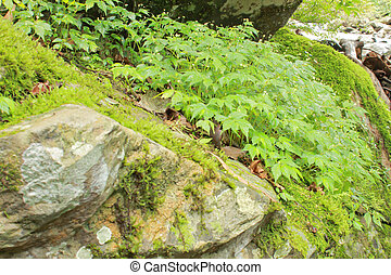 Stones with green moss and tree in forest