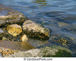 Stones with seaweed in the sea