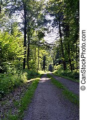 Stony path in the forest.