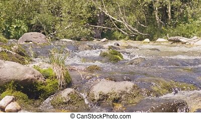 Stony river stream in mountain forest. Water stream quickly...