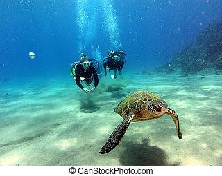Stop following me 1 - Hawaiian green sea turtle in Maui ...