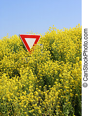 Stop GMO - Stop aux OGM - Overflowing rape field in Brittany...