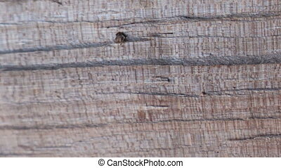 Stop motion animated wood texture background useful for old...