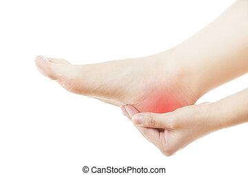 stopa boleją, samica