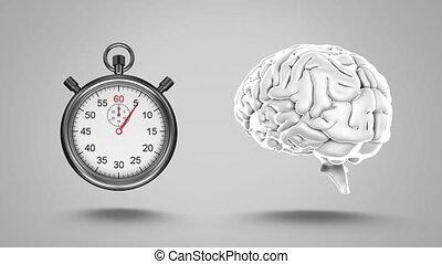 stopwatch and human brain