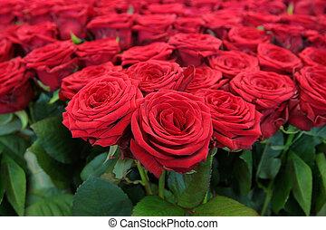 stor, bundtet af, røde roser