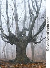 stor, dött träd, in, dimmig, skog