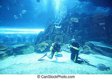 stor, dykare, två, kostymen, akvarium, våt, fiskar, dykning...
