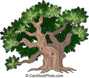 stor, eg træ
