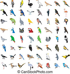 stor, fåglar, kollektion