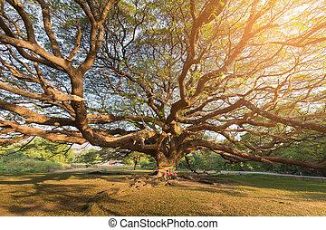 stor, gigant, träd, in, publik parkera, med, sol, lyse, verkan