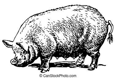 stor, gris