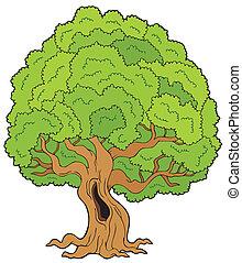 stor, lövad träd