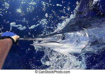 stor, marlin, lek, atlanten, fiske, vit, sport