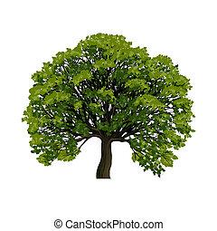 stor, symbol, vektor, grönt träd