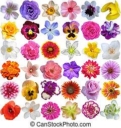 stor, udvælgelse, i, adskillige, blomster, isoleret, på hvide, baggrund
