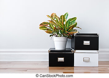Storage boxes and green plant in a room - Black and white...