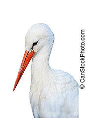 storch, (ciconia), vogel