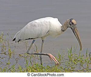 storch, holz