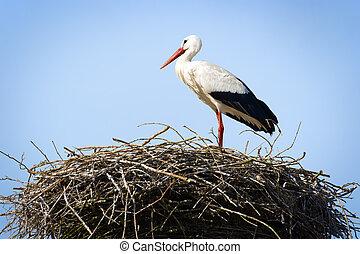 storch, stehende , in, nest