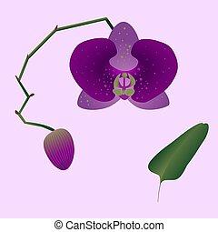 storczyk, różowy, pączek, lekki, liść, ilustracja, pień, tło.