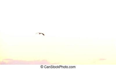 stork 1