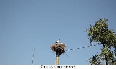 stork bird nest pole