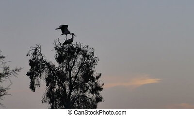 stork bird on a tree background