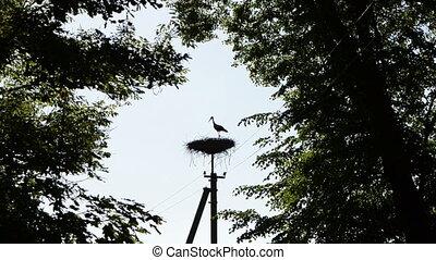 stork bird silhouette